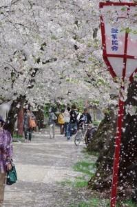2012弘前公園08