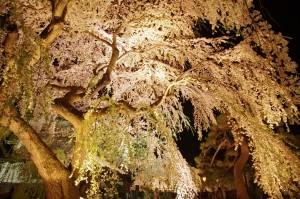 2012弘前公園15