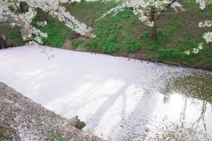 2012弘前公園11