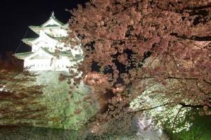 2012弘前公園14
