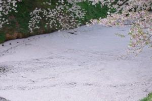 2012弘前公園10