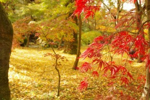 2015京都紅葉狩り05