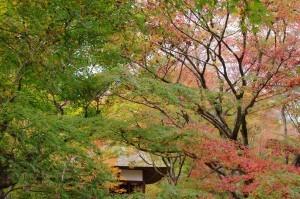 2015京都紅葉狩り14