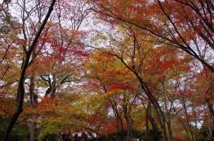 2015京都紅葉狩り15