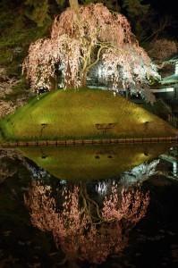 2014弘前公園16