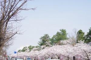 2014弘前公園01