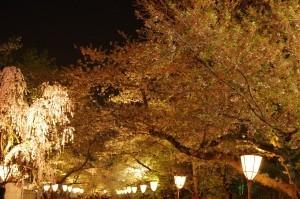 2015弘前公園18