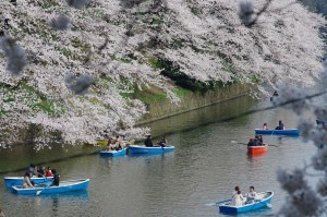 20130330千鳥ヶ淵上野公園02