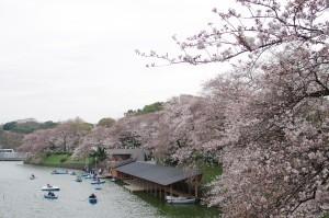 20140330千鳥ヶ淵、隅田公園03