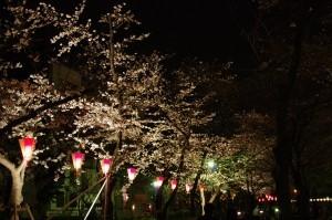 20140330千鳥ヶ淵、隅田公園04