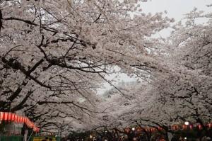 20130330千鳥ヶ淵上野公園06