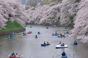 20130330千鳥ヶ淵上野公園01