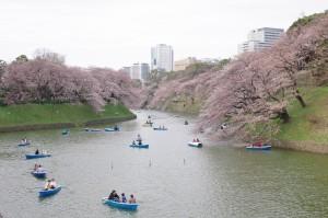 20140330千鳥ヶ淵、隅田公園01