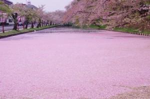 2015弘前公園11