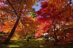 2012京都紅葉17