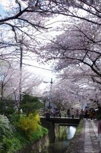 2014京都花見18