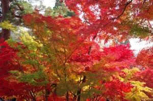 2014京都紅葉狩り19