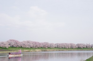 2016大河原一目千本桜05