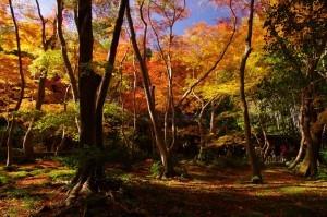 2012京都紅葉14
