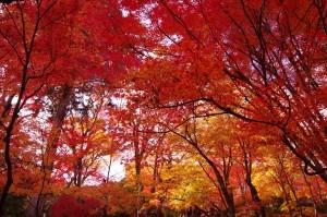 2014京都紅葉狩り16