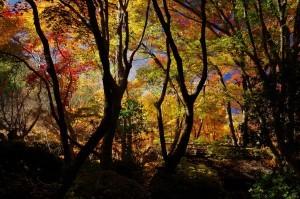 2012京都紅葉13