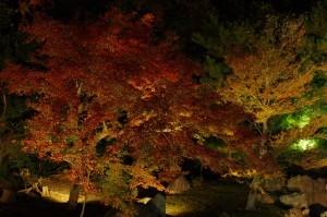 2013京都紅葉狩り11