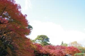 2014京都紅葉狩り09