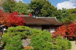2014京都紅葉狩り11