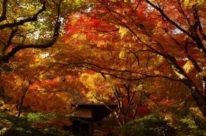 2013京都紅葉狩り09
