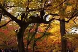 2013京都紅葉狩り20