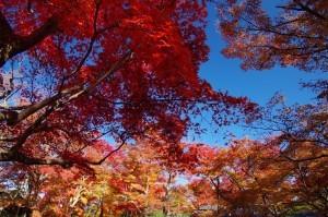 2012京都紅葉18