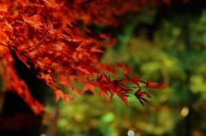 2013京都紅葉狩り13