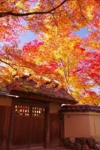 2012京都紅葉20