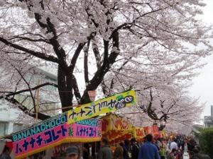2016新川の桜01