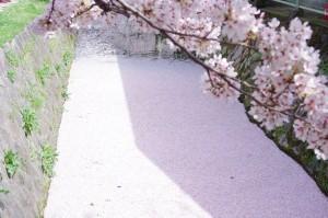 2014京都花見07
