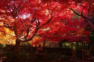 2012京都紅葉12