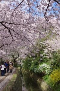 2014京都花見19