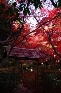 2012京都紅葉11