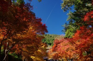 2012京都紅葉08