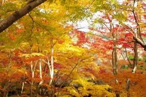 2013京都紅葉狩り10