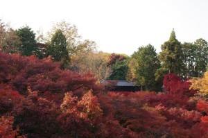 2013京都紅葉狩り19