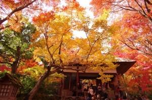2014京都紅葉狩り15