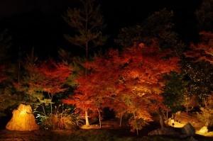 2013京都紅葉狩り12