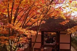 2012京都紅葉07