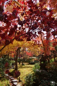 2014京都紅葉狩り10
