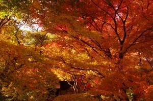 2013京都紅葉狩り08
