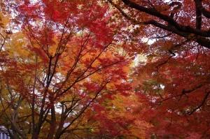 2013京都紅葉狩り23