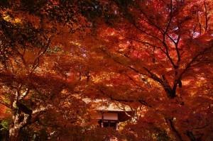 2012京都紅葉06