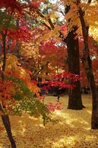2014京都紅葉狩り25