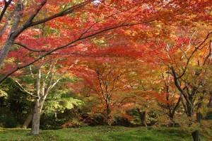 2013京都紅葉狩り22